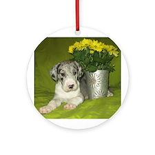 Merle Great Dane puppy Ornament (Round)