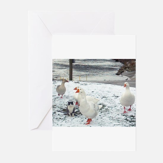 Cat that thinks it's goose Greeting Cards