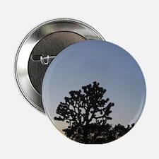 """Joshua Tree at Sunset 2.25"""" Button"""