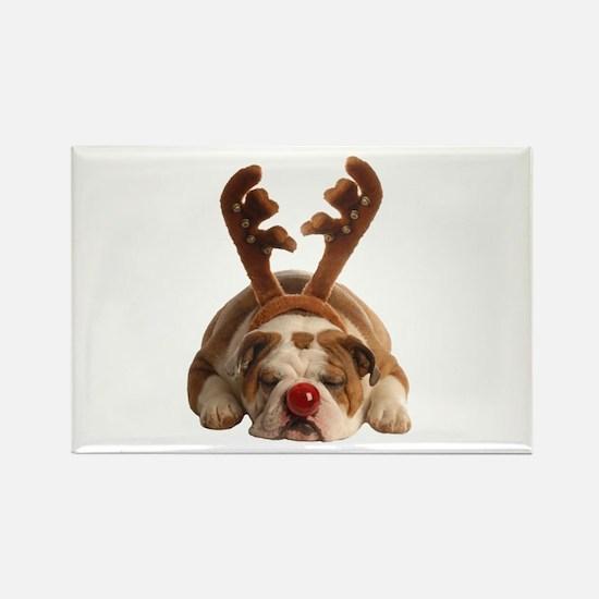 Christmas Reindeer Bulldog Magnets