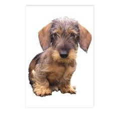 Wire Haired Red Dachshund Postcards (Package of 8)