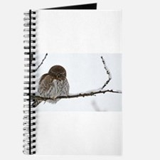 Northern Pygmy Owl- The Look Journal