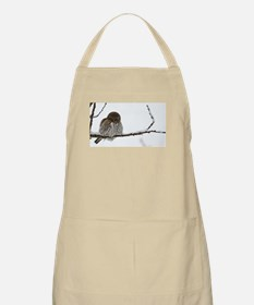 Northern Pygmy Owl- The Look Apron