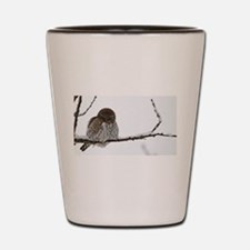 Northern Pygmy Owl- The Look Shot Glass