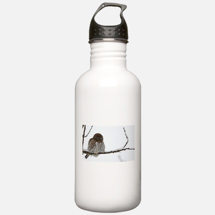 Northern Pygmy Owl- The Look Water Bottle