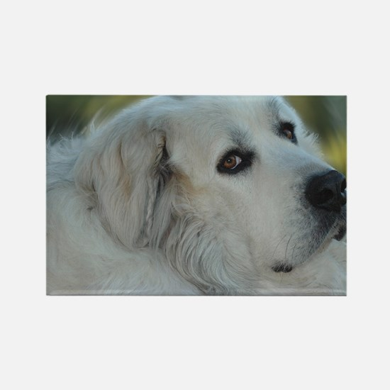 Cute Great pyrenees dog Rectangle Magnet