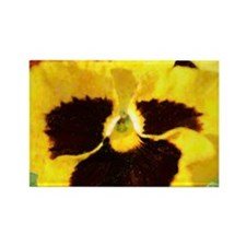 Yummy Yellow Pansy Rectangle Magnet