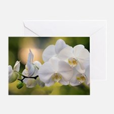 Cute Orchid close up Greeting Card