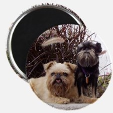 Rough Brussels Griffon Magnet
