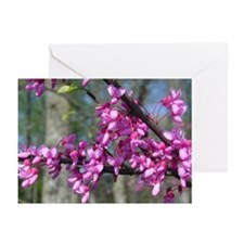 Redbuds Greeting Cards (Pk of 10)