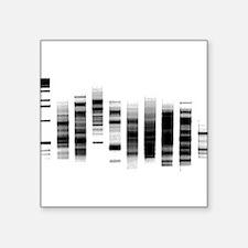 "Funny Biology Square Sticker 3"" x 3"""