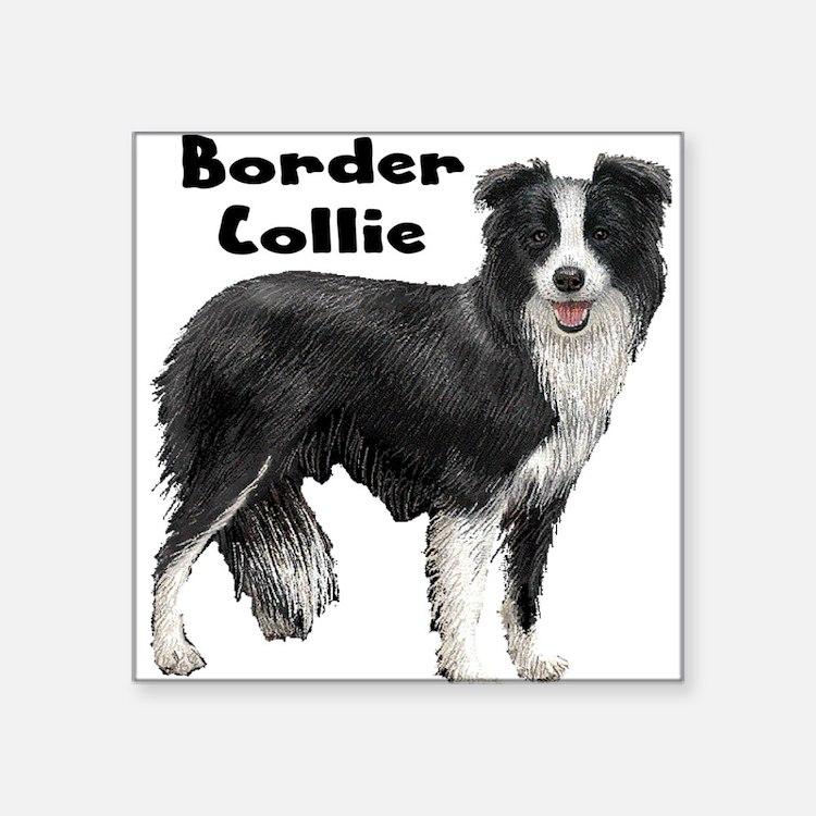"""Cute Border collie puppy Square Sticker 3"""" x 3"""""""