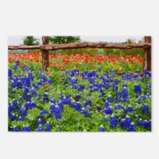 Bluebonnet Postcards (package Of 8)