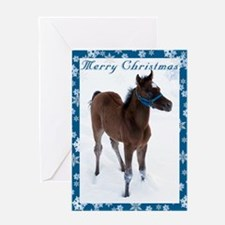 Arab Foal Christmas Card