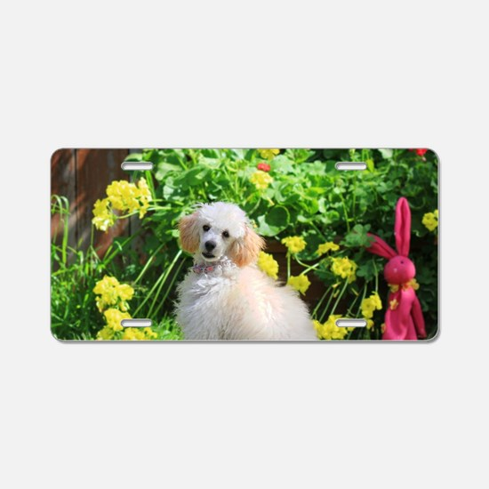 Spring Toy Poodle Aluminum License Plate