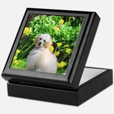 Spring Toy Poodle Keepsake Box