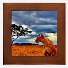Lioness Storm Framed Tile