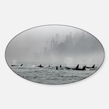 Passing Whales Decal
