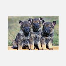 Unique Dogs puppies Rectangle Magnet