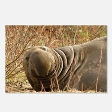 MALE ELEPHANT SEAL - Postcards (Package of 8)