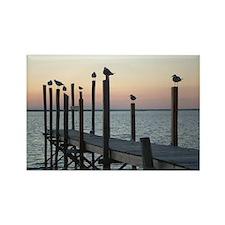 Sunset Gulls Rectangle Magnet