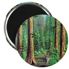 Humboldt Redwoods Magnet