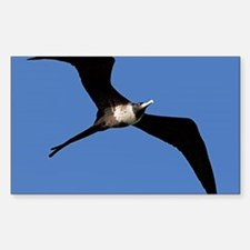 Frigate bird Decal