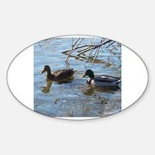 Unique Hen mallard Sticker (Oval)