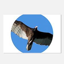 Turkey Vulture in Flight Postcards (Package of 8)