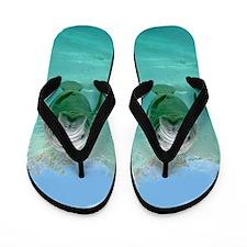 Baby Manatees for Flip Flops Flip Flops