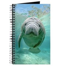 Journal With Baby Manatee In The Springs
