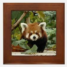 Unique Panda bears Framed Tile