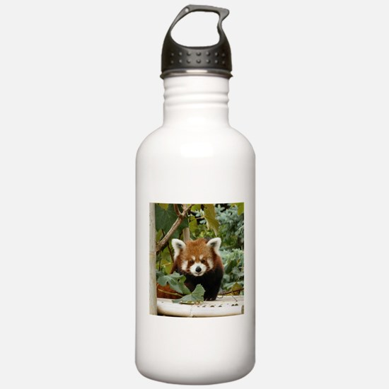 Funny Cute fox Water Bottle