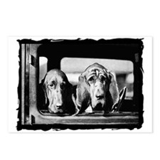 Vintage Bloodhound Postcards (Package of 8)
