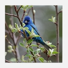Cute Bird lovers Tile Coaster