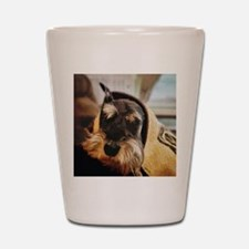 schnauzer peekaboo Shot Glass