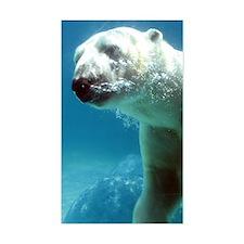 Swim With The Polar Bear Decal