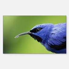 Cool Tanager Sticker (Rectangle)