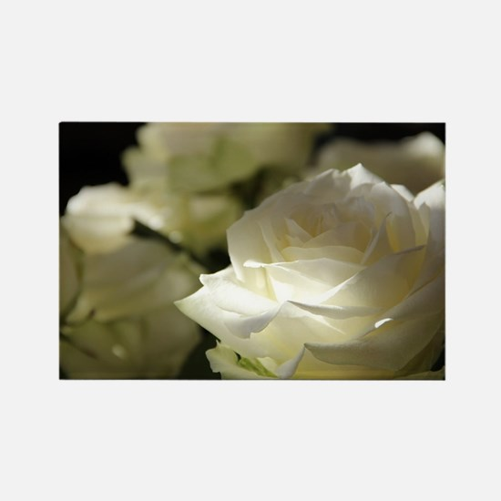 Cute White rose Rectangle Magnet