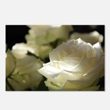 Unique White rose Postcards (Package of 8)
