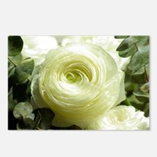 Funny White rose Postcards (Package of 8)