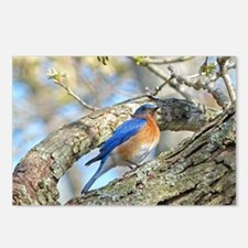 Bluebird Postcards (Package of 8)