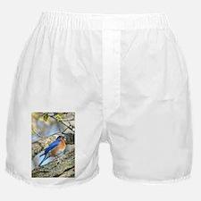 Bluebird Boxer Shorts