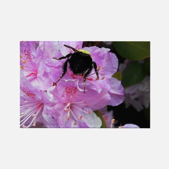 Honeybee on Azaleas Magnets