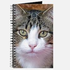 I'm Thinking Journal