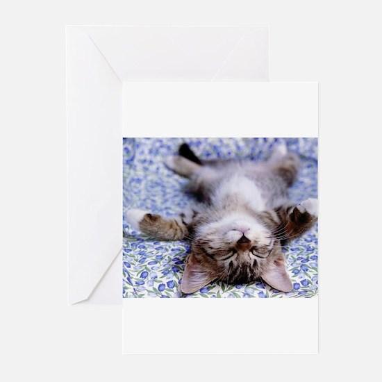 Cute Cat Greeting Cards (Pk of 10)