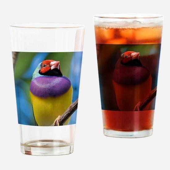 Cute Gouldian finch Drinking Glass