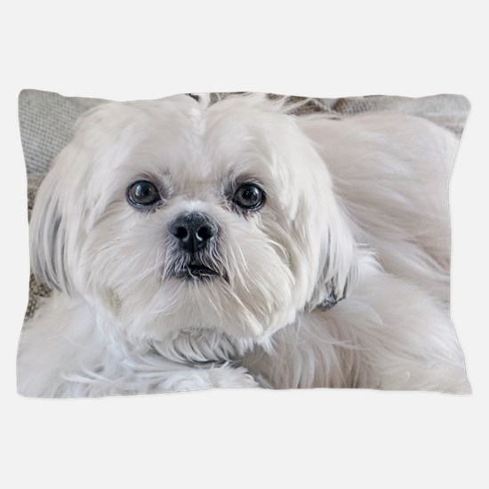 Cute Small dogs Pillow Case