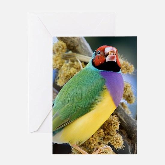 Gouldian Greeting Card