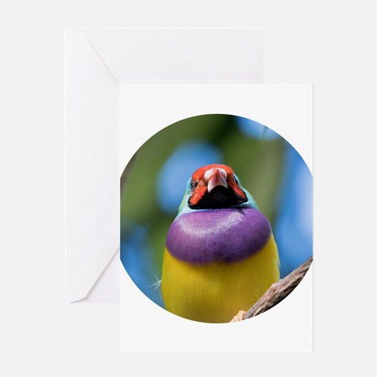 Gouldian Finch Look Greeting Cards